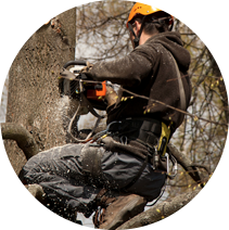 Удаление деревьев в Казани