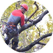 Удаление деревьев с подвешиванием частей