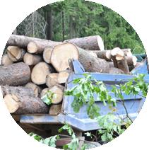 Вывоз и утилизация порубочных остатков